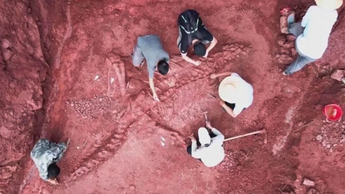 Paleontólogos chinos descubren el fósil casi completo de un dinosaurio del Jurásico de unos 8 metros de largo