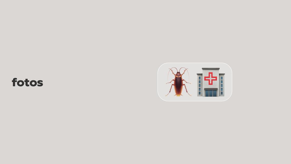 FOTOS: Un hombre lleva a una cucaracha herida a un hospital veterinario en Tailandia