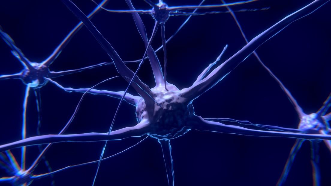 Combinan 225 millones de imágenes para crear el mapa 3D más detallado del cerebro humano (FOTO)