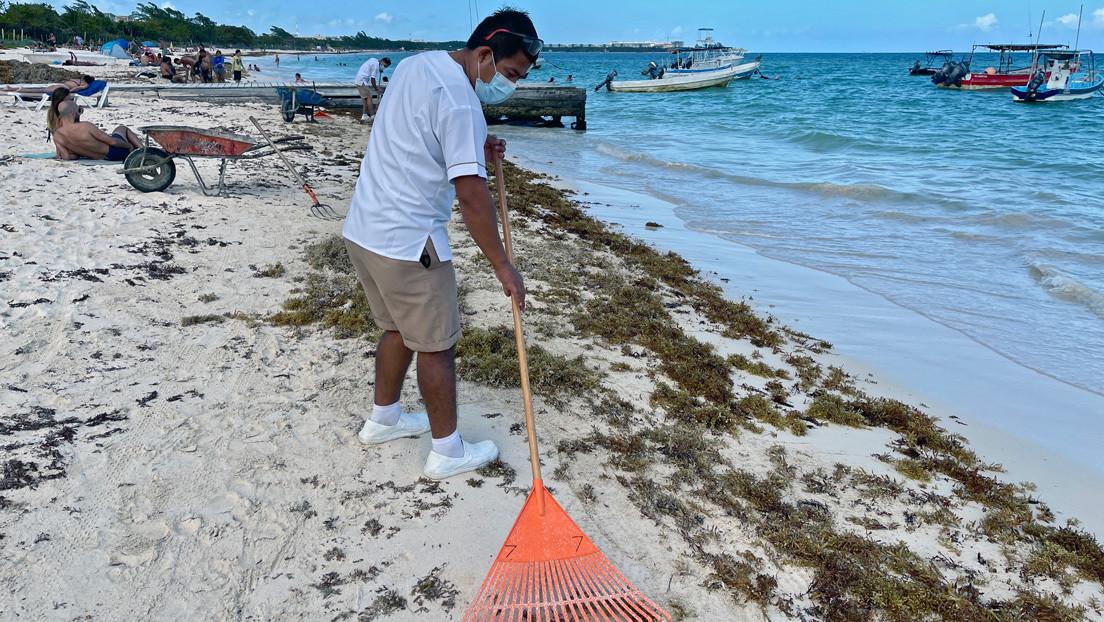 Alarma en las playas mexicanas de Quintana Roo por la llegada de una inmensa y espesa marea de algas