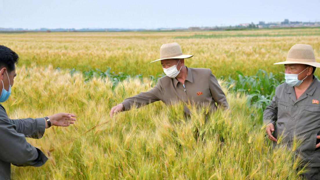 """Kim Jong-un declara una situación alimentaria """"tensa"""" en Corea del Norte por el paso de tifones"""