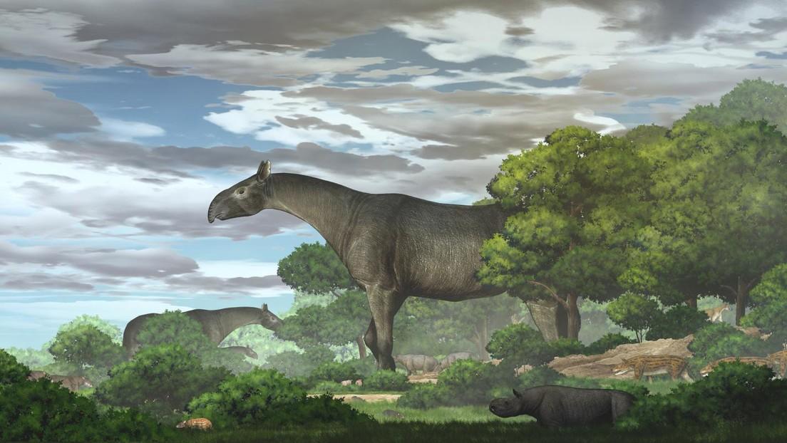 Descubren una nueva especie de rinoceronte gigante que habitó en Asia Central hace más de 20 millones de años