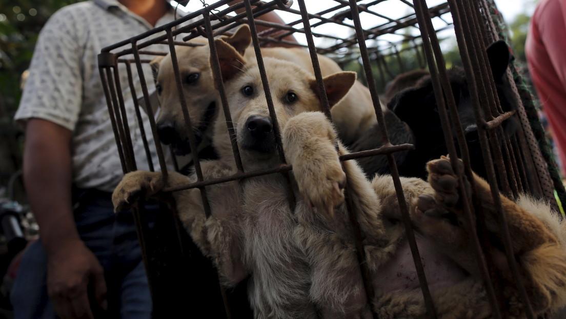Comienza en China el polémico festival de la carne de perro de Yulin