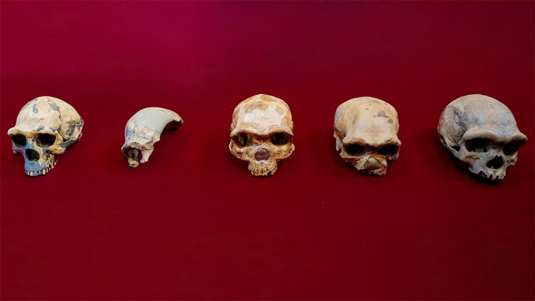 Hallan en China el cráneo del 'hombre dragón' de 140.000 años de antigüedad, que representa una nueva especie de homínido