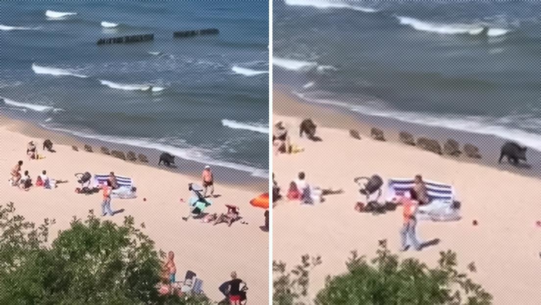 VIDEOS: Jabalíes inician la temporada de playa 2021 en el mar Báltico