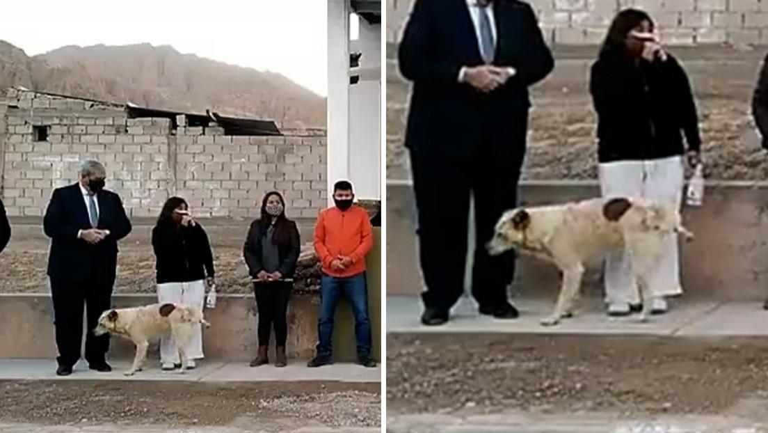 VIDEO: Un perro se cuela en un acto público y orina a los pies de una intendenta en Argentina