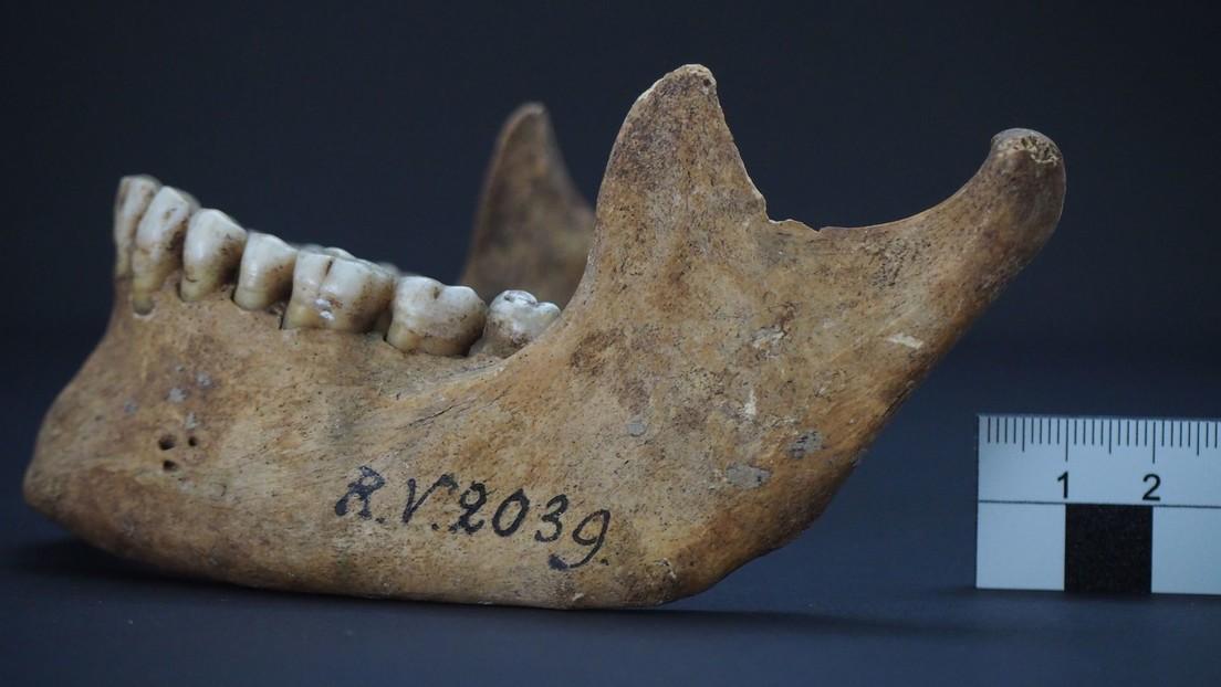 Descubren en el cráneo de un cazador-recolector prehistórico una bacteria de la plaga que causó la peste negra hace 5.000 años
