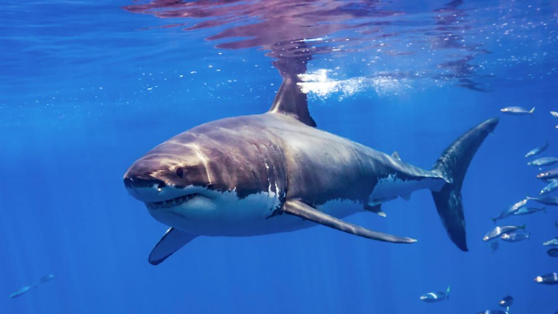 Un tiburón salta por encima del agua y muerde en el aire a un hombre que practicaba 'parasailing' (VIDEO)