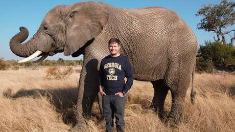 """Descubren características en las trompas de los elefantes que las vuelven una """"navaja suiza"""" capaz de realizar una gran cantidad de funciones"""