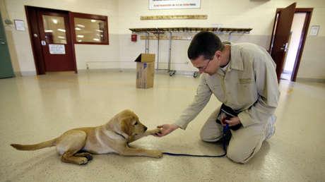 Científicos demuestran que los perros están biológicamente preparados para interactuar con los humanos desde su nacimiento