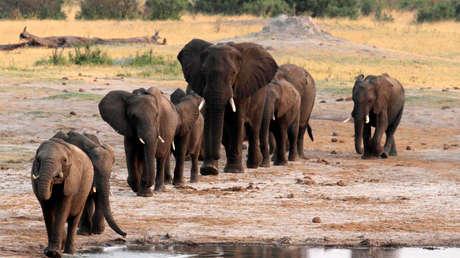 Alertan de que el proyecto de un nuevo campo petrolífero en Botsuana y Namibia amenaza la vida de 130.000 elefantes