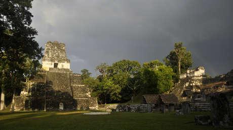 Un análisis de ADN sugiere que los antiguos mayas tenían imponentes parques alrededor de sus fuentes de agua