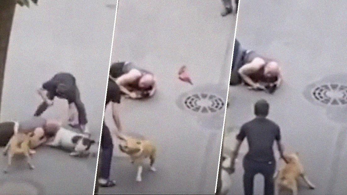VIDEO: Un hombre cubre con su cuerpo a su viejo perro para protegerlo del feroz ataque de dos american staffordshire terriers