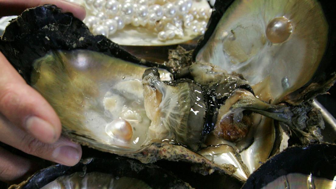 Perlas marinas: un lujo escaso que México busca proteger