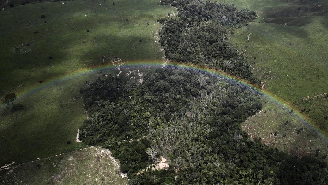 El aumento del dióxido de carbono en la Amazonía podría afectar las precipitaciones más que la deforestación