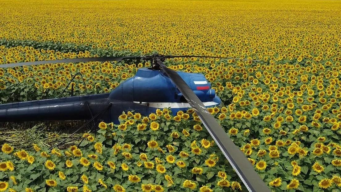 Un helicóptero realiza un aterrizaje forzoso en el sur de Rusia y el piloto lo abandona en medio de un campo de girasoles