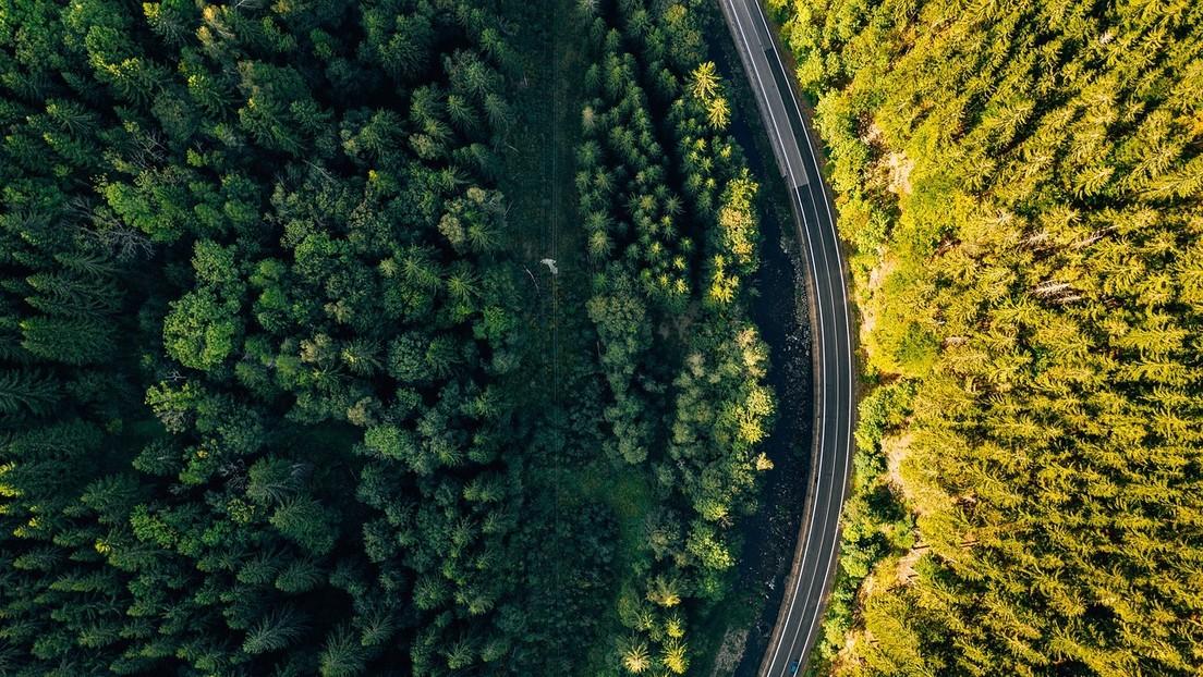 Descubren que plantar árboles 'atrae' más lluvias en verano: ¿el mejor remedio contra el cambio climático?