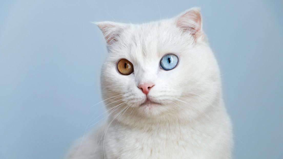Estudios sugieren alta prevalencia de COVID-19 en mascotas cuyos dueños contrajeron la enfermedad