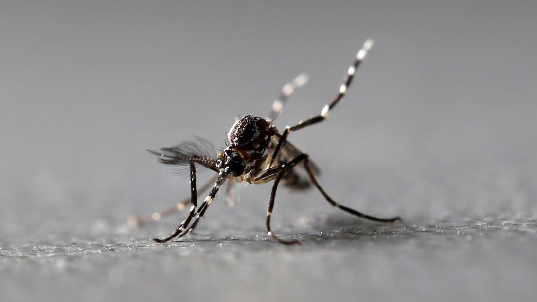 Detectan mosquitos portadores de un virus capaz de paralizar a los humanos en al menos siete estados de EE.UU.