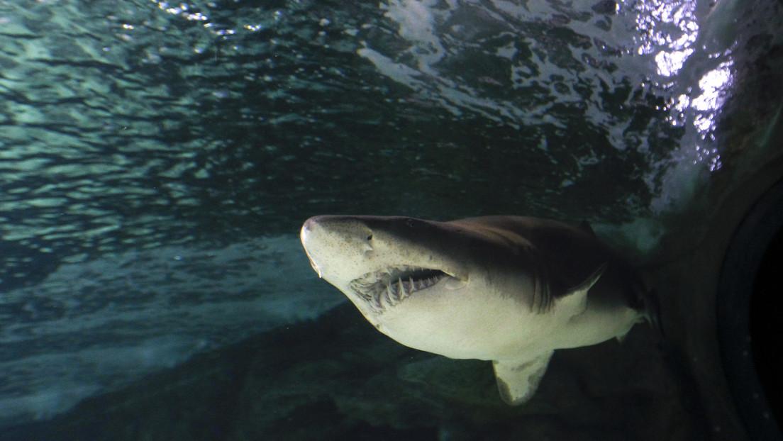 Dientes de tiburón de hace millones de años arrojan luz sobre el cambio del clima en la Tierra