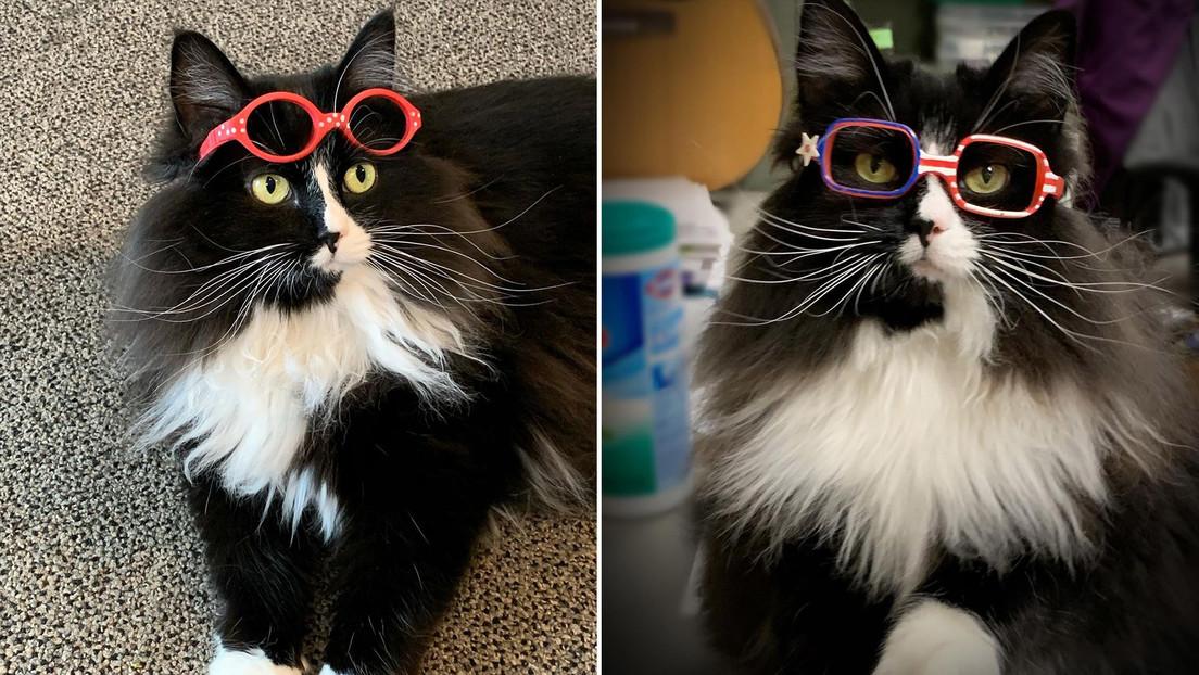 Una gata que 'trabaja' en una clínica oftalmológica infantil ayudando a los niños a relajarse conquista la Red (VIDEO)