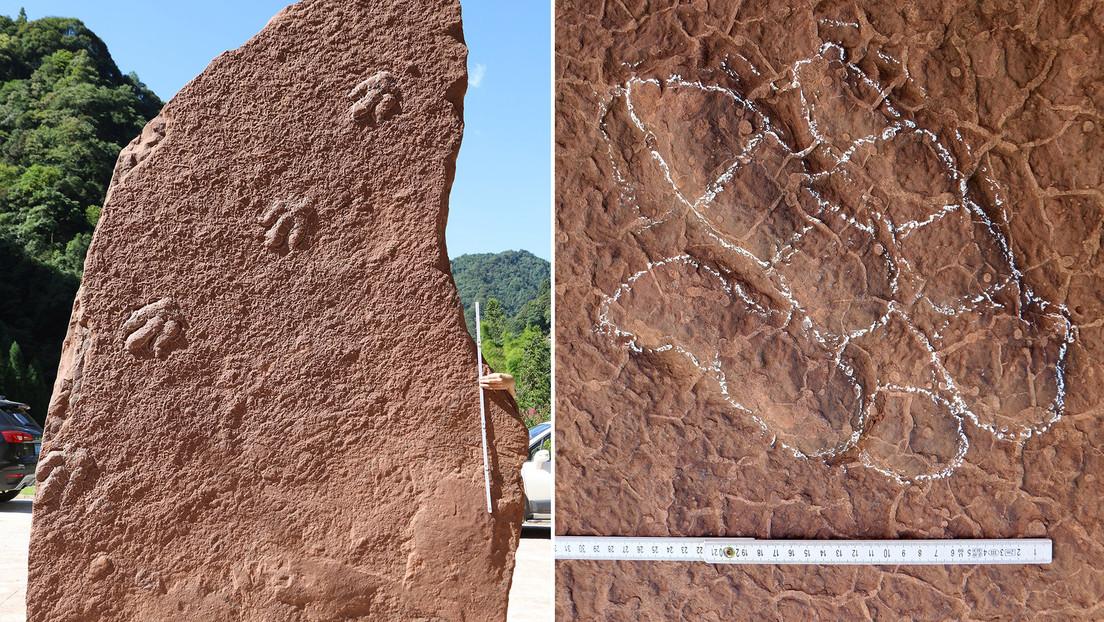 Un dinosaurio recién descubierto en China recibe nombre en homenaje a un personaje clásico del manga japonés