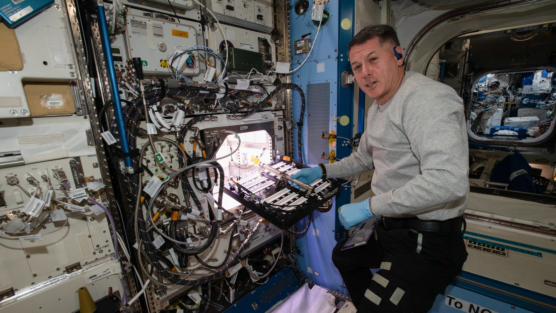 Astronautas de la NASA comienzan a cultivar pimiento picante a bordo de la EEI (y será parte de su dieta)