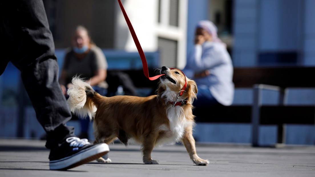 Tel Aviv realizará pruebas de ADN para multar a los dueños de perros que no limpien sus excrementos en la calle