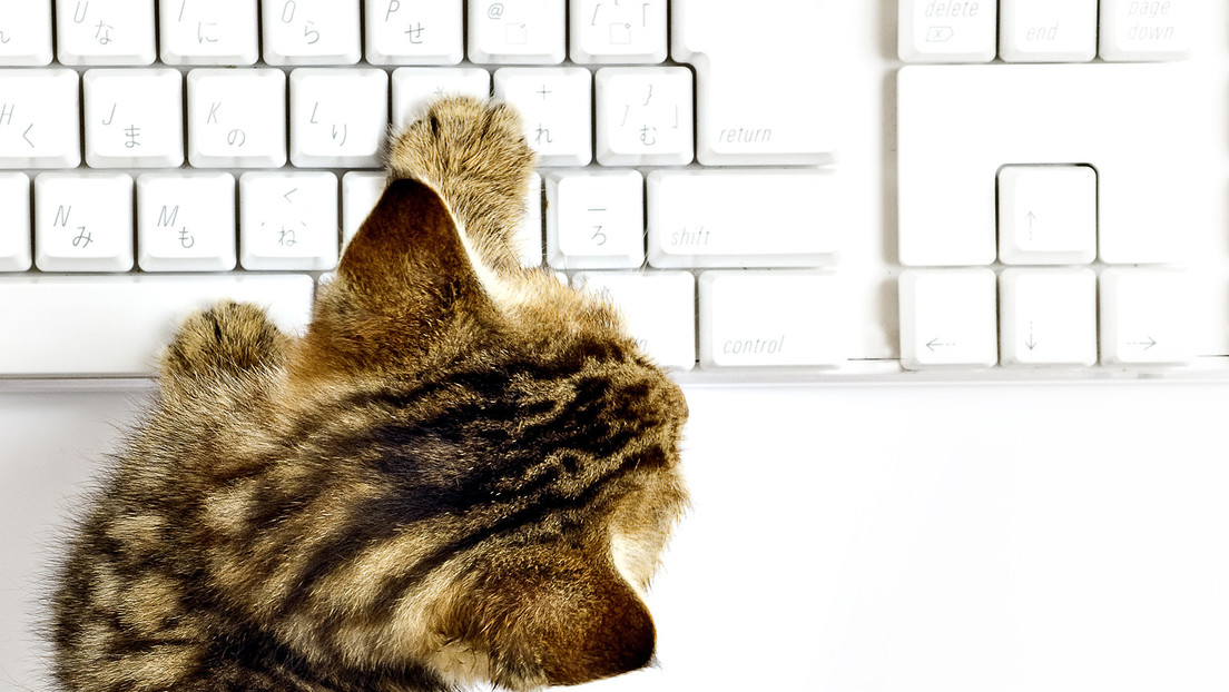 Un gato escribe un 'artículo' para una web especializada en videojuegos
