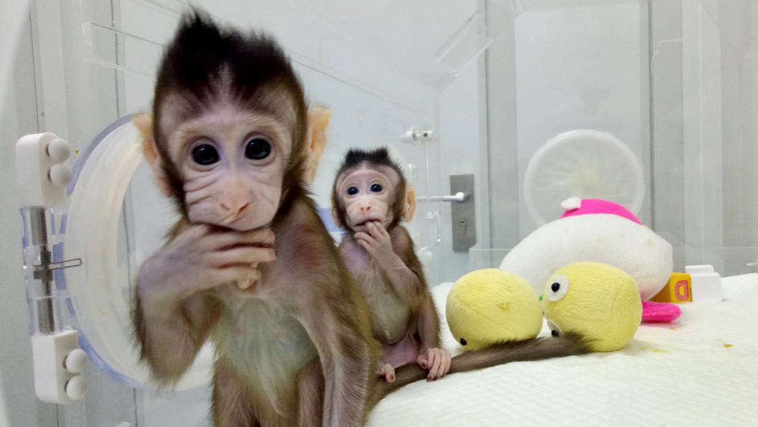 Síntomas, tratamiento, mortalidad: ¿Qué se sabe del virus del mono B que se contrae con una mordida del macaco?