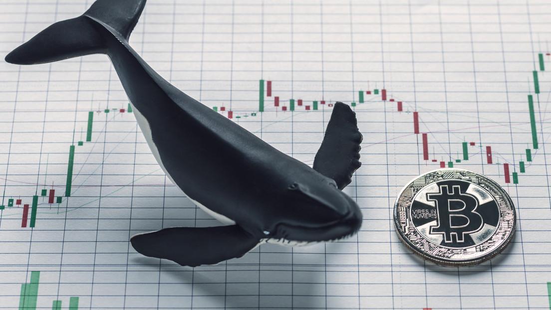 Inversores 'ballena' llenan sus arcas aprovechando la liquidación de bitcoines de mineros