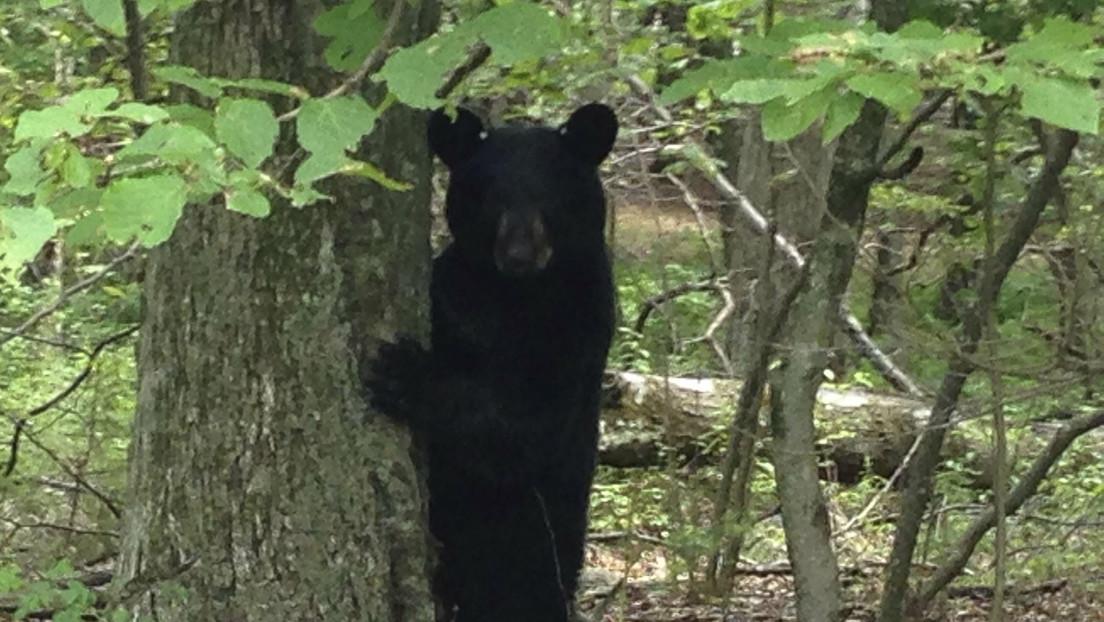 VIDEO: El dramático momento en el que un hombre abre la puerta de su auto para sacar a un oso