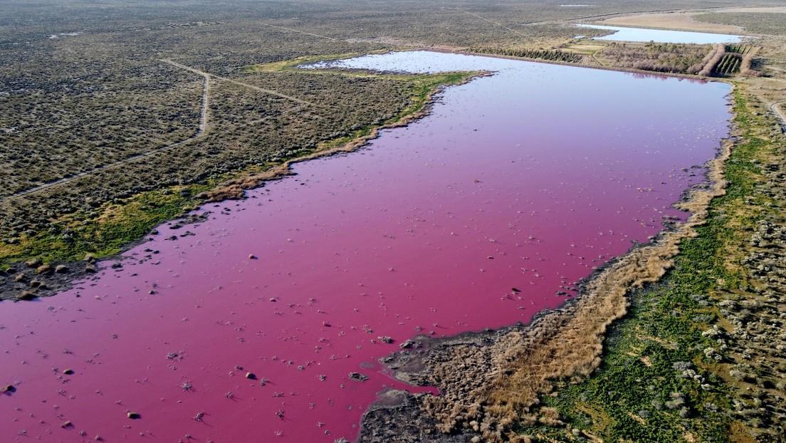 VIDEO: Una laguna se tiñe de rosa en Argentina debido a la contaminación por el vertido de residuos de empresas pesqueras