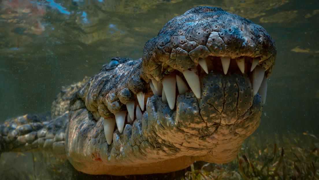 Una adolescente es atacada por un cocodrilo de más de 3,5 metros en un concurrido destino turístico en el Pacífico mexicano