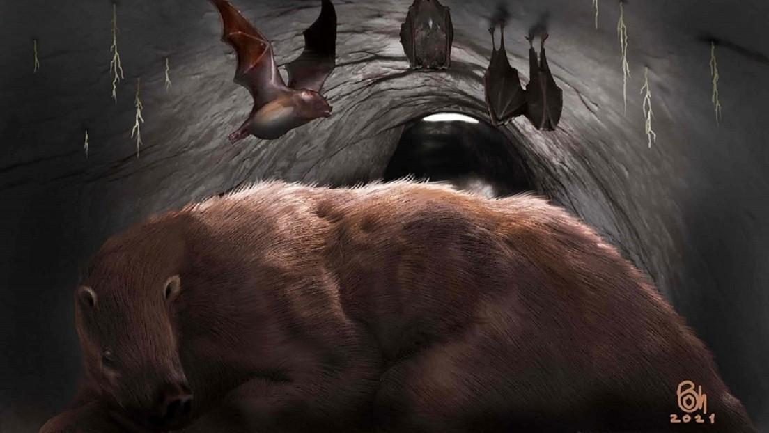"""""""Un verdadero vampiro gigante de 100.000 años"""": Hallan en Argentina los restos fósiles de un ejemplar de murciélago de una especie extinta"""