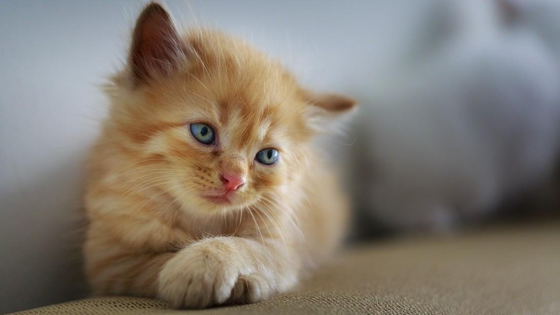 Condenan a más de 5 años de prisión a un asesino en serie de gatos en el Reino Unido