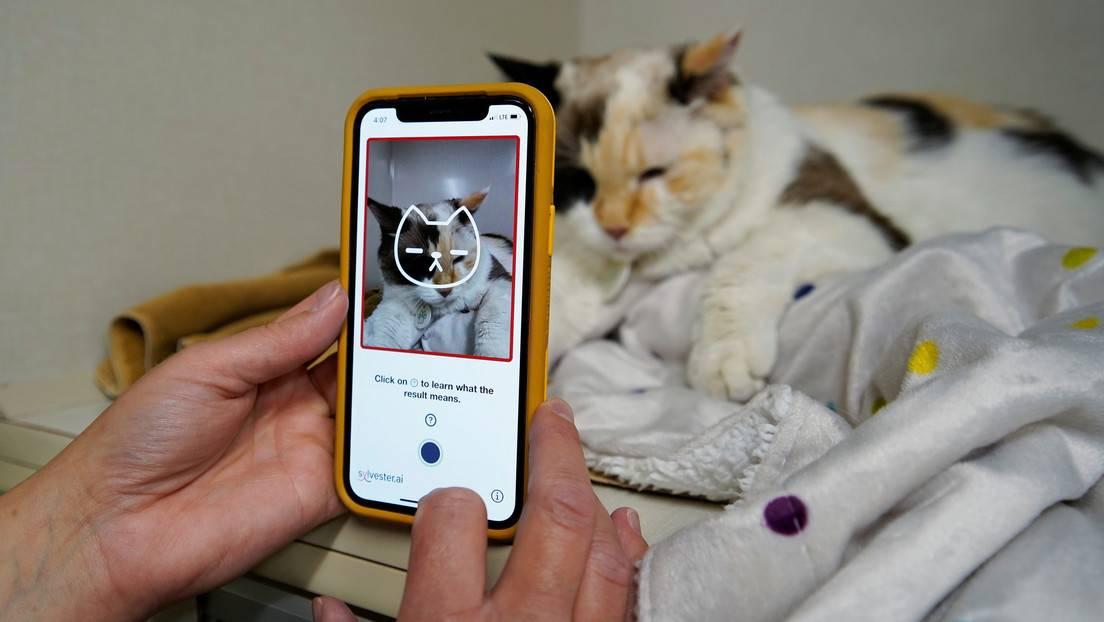 Prueba de la aplicación Tably en una clínica veterinaria de Calgary, Canadá, el 14 de julio de 2021.
