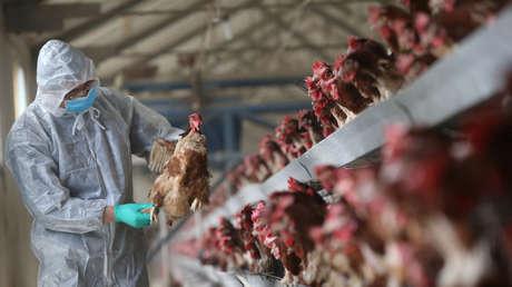 China reporta un caso de infección humana por la cepa H5N6 de gripe aviar