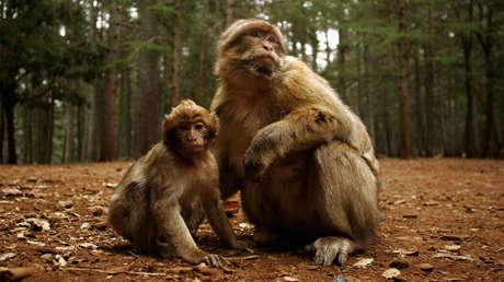 China confirma el primer caso de muerte de una persona a causa de un virus que transmiten los monos