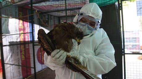 La India reporta la primera muerte por gripe aviar de la cepa H5N1