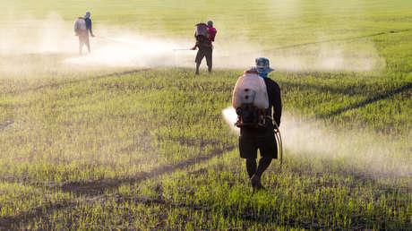 Químicos para siempre: compuestos omnipresentes que destruyen la salud, la agricultura y la vida en los océanos