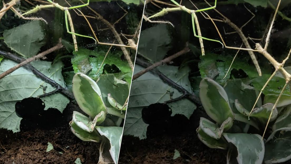 Un zoo lanza el desafío de localizar 9 insectos 'camuflados' en 20 segundos