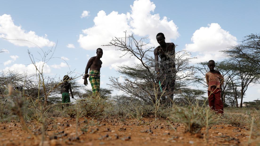 Oxfam: La reforestación del planeta para mitigar el cambio climático amenaza con agravar la hambruna