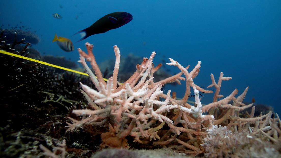 Tailandia prohíbe el uso de protectores solares con químicos que dañen a los arrecifes de coral