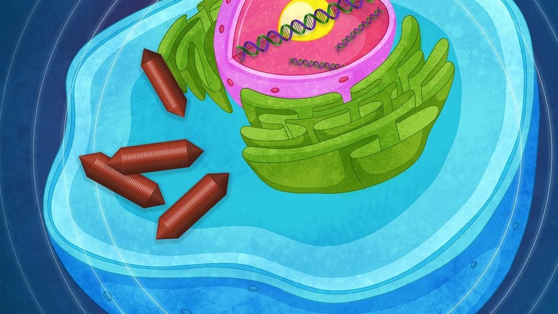 Científicos hacen estallar vesículas de aire en las células para lograr un examen por ultrasonido más sensible
