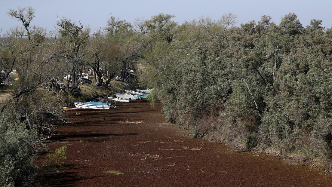 La sequía histórica del segundo río más importante de Suramérica permite cruzar caminando de Argentina a Paraguay (VIDEO)