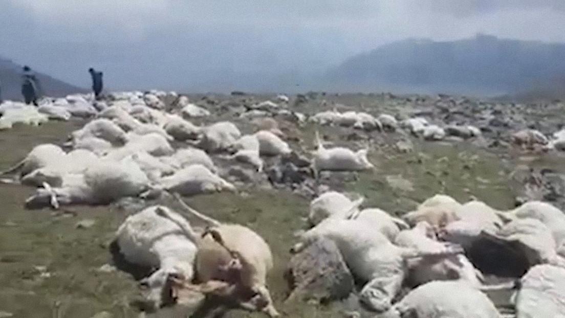 VIDEO: Más de 500 ovejas mueren tras ser alcanzadas por un rayo mientras pastaban en una montaña de Georgia