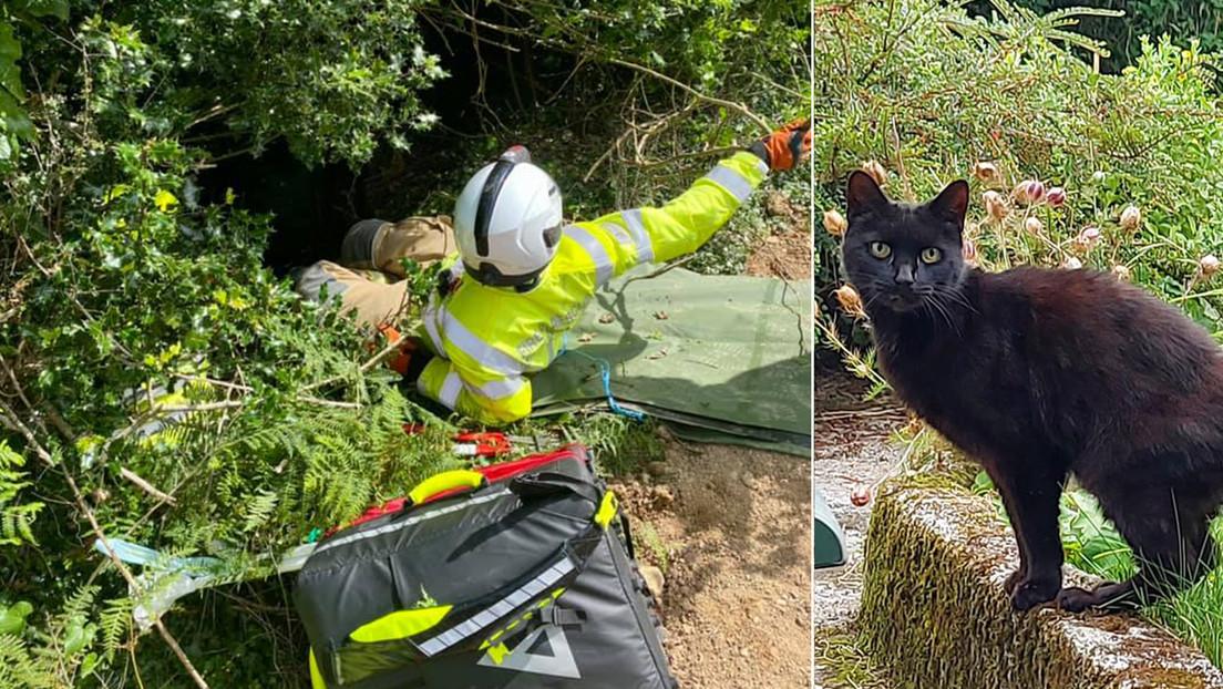 Un gato maúlla pidiendo ayuda para su dueña de 83 años, caída en un barranco, y le salva la vida