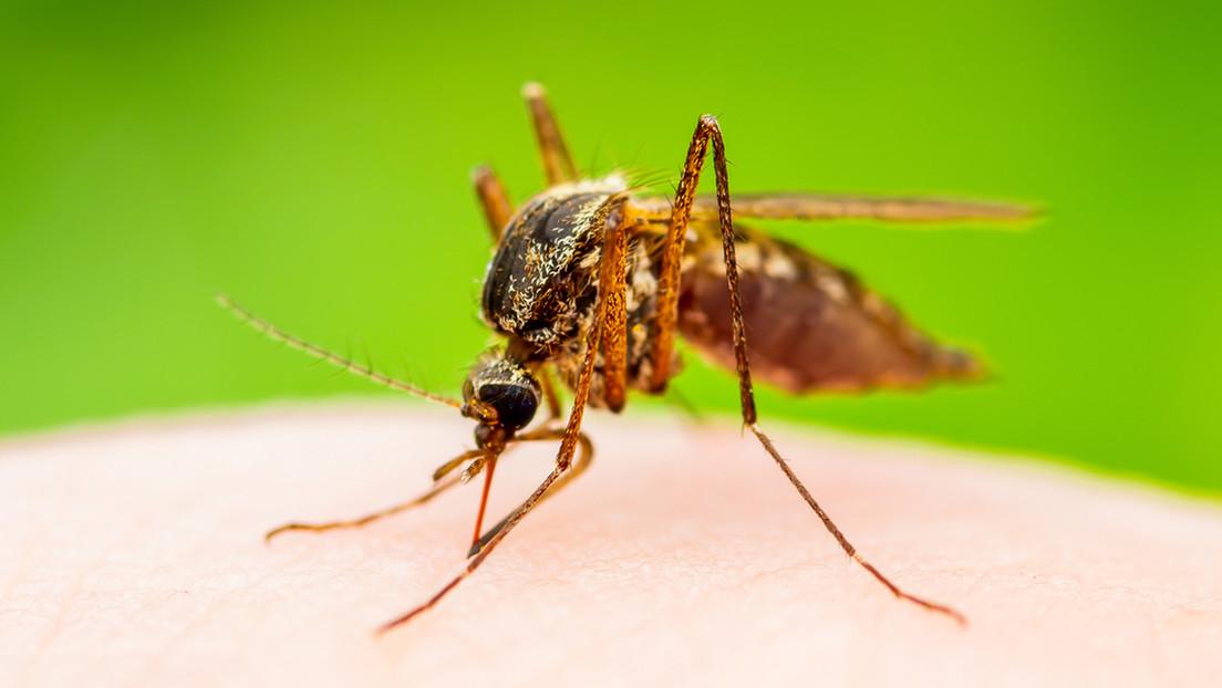 Detectan en España un nuevo caso de un virus capaz de paralizar a los humanos