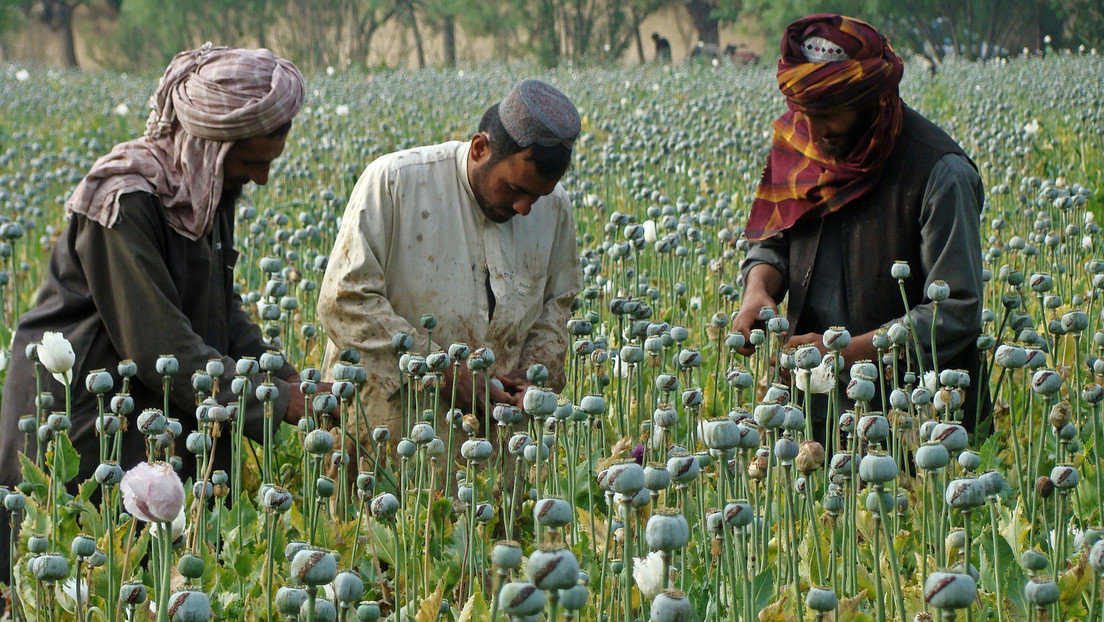 """Revelan las fuentes de ingresos de los talibanes a lo largo de 20 años de """"administración paralela parásita"""""""